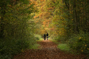 Two-persons-walking-in-the-trees