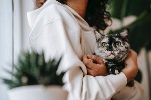 pet adoption statistics