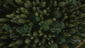 Aerial view of a tree forest