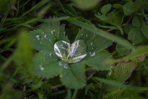 Heart shaped raindrop falling onto a leaf